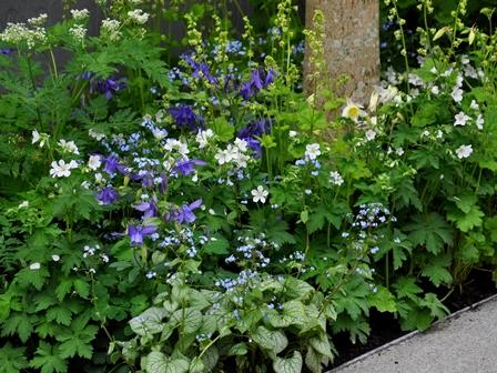 Skønne planter i smuk kombination
