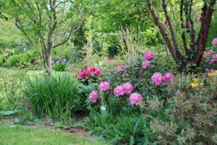 Udsnit af rhododendronbede